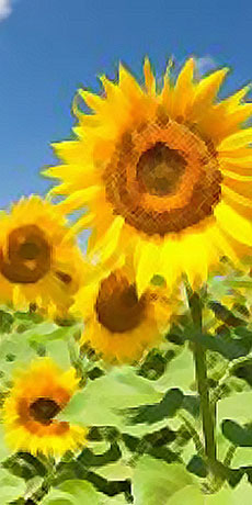Camera Girasole - Affittacamere Bed and Breakfast Da Nonna Elisa Roseto Valfortore